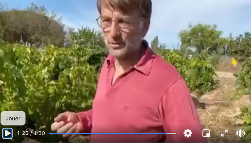 Le point sur la date des vendanges